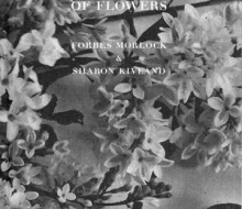 Freud and the Gift of Flowers